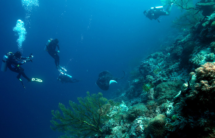 At Tubbataha Reef you'll get to see all sorts of underwater marvels