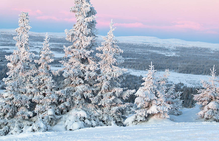Snow-topped trees and pinkish skies cover Himos, a perfect spot for skiing in Finland